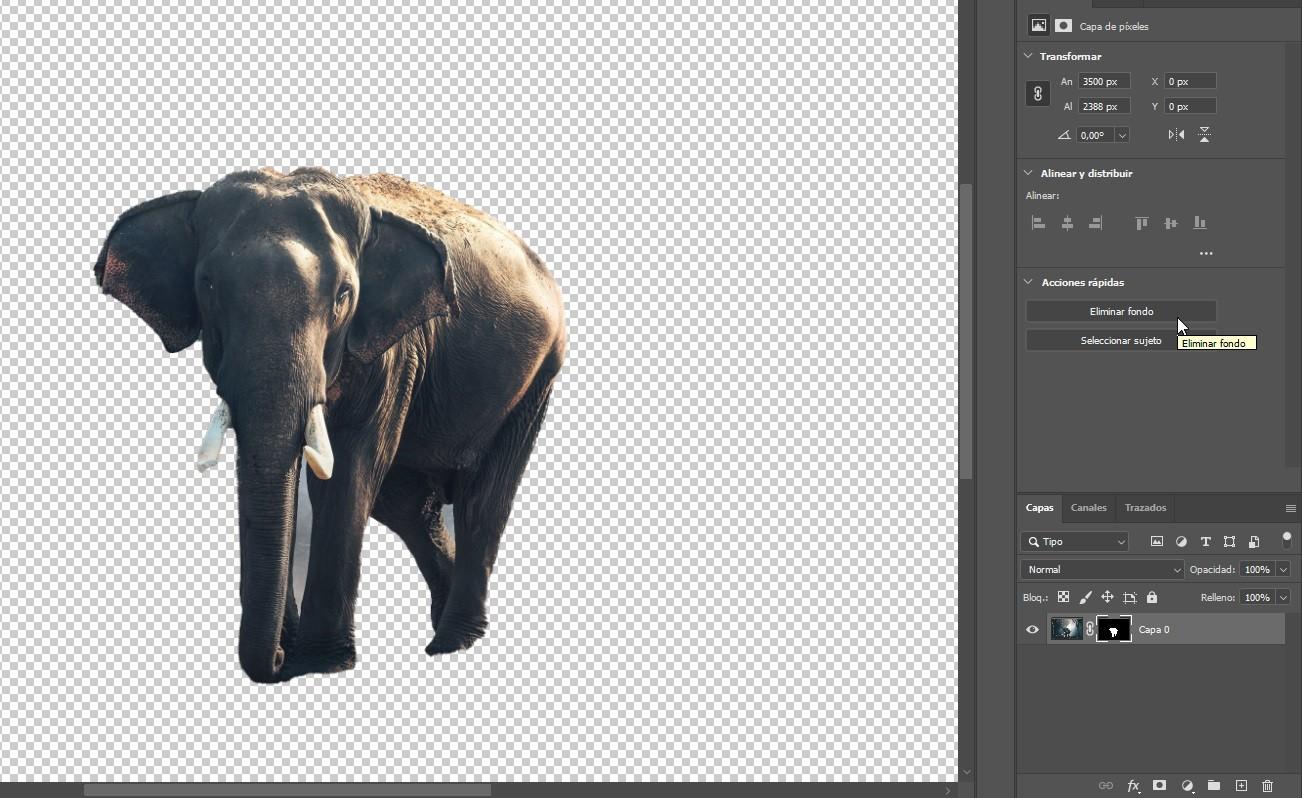 Photoshop CC 2020 Img. 8